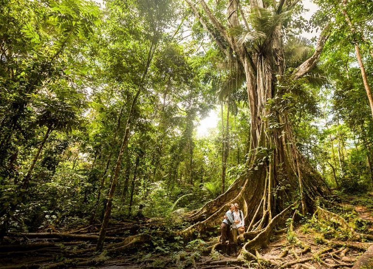 Nature and spirituality in the rainforest