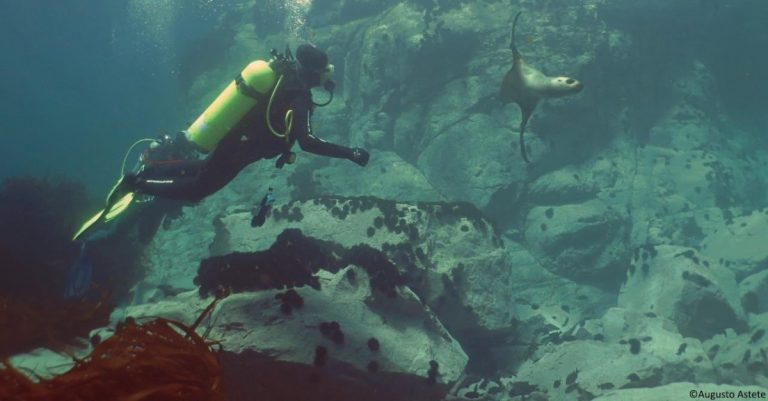 DISCOVER SCUBA DIVING <br />